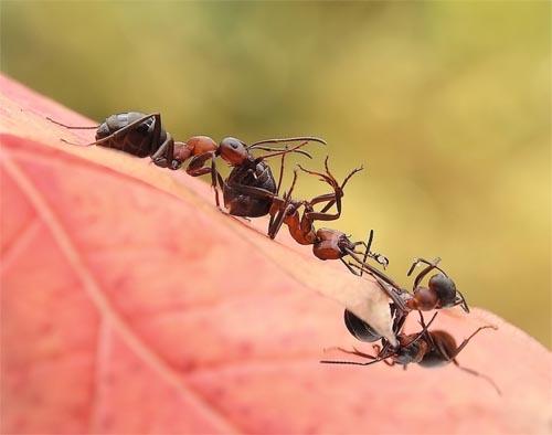 Ant Queue