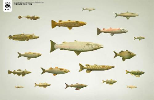 WWF Sweden: Fish