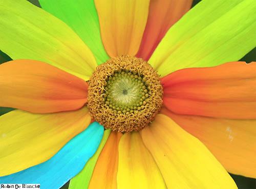Flower-Manipulation