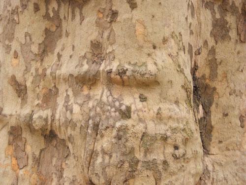 Tree Wood Texture 1