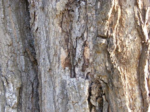 Tree Wood Texture 10