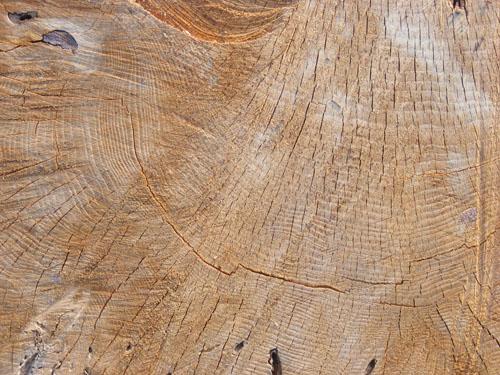 Tree Wood Texture 12