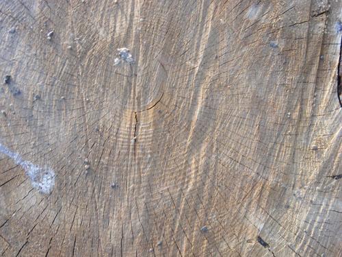 Tree Wood Texture 13