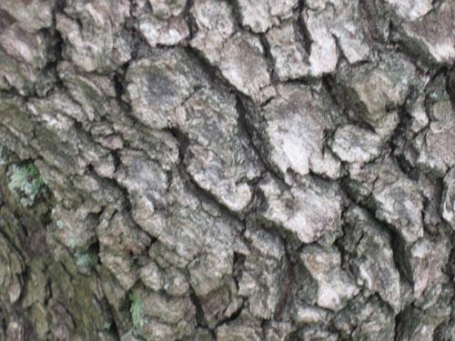 Tree Wood Texture 15