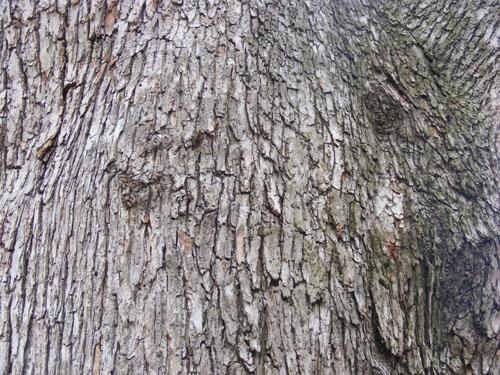 Tree Wood Texture 3