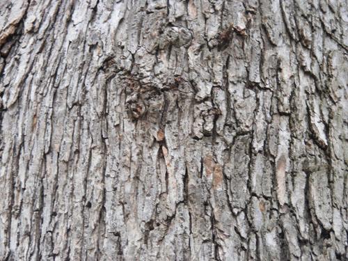 Tree Wood Texture 4