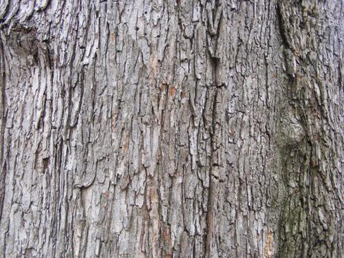 Tree Wood Texture 5