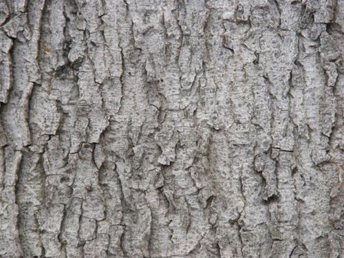 Tree Wood Texture 6