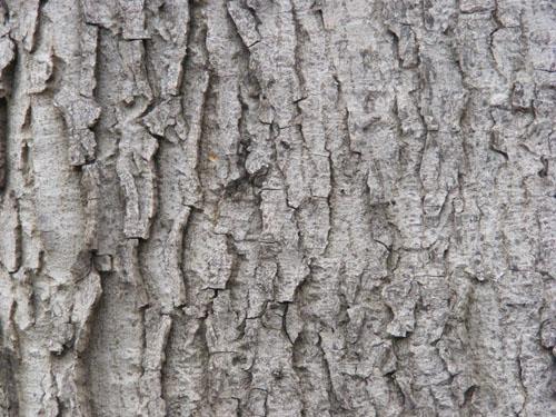 Tree Wood Texture 7
