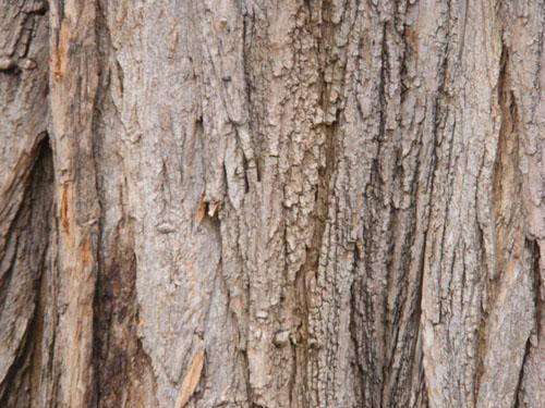 Tree Wood Texture 8