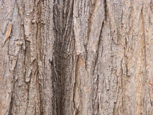 Tree Wood Texture 9