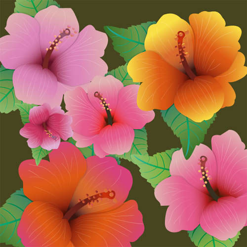 hibiscus flowers - vector freebies