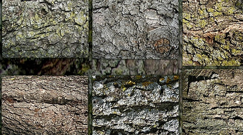 200+ Excellent Free High Quality Tree Bark Textures