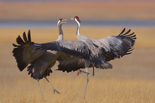 Wildlife Astonishing Moments Captured By Photographers 17