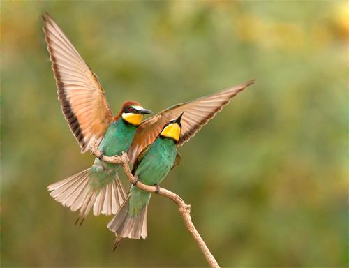 Wildlife Astonishing Moments Captured By Photographers 9