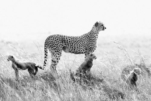 Wildlife Astonishing Moments Captured By Photographers 13