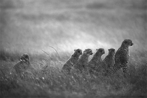 Wildlife Astonishing Moments Captured By Photographers 14