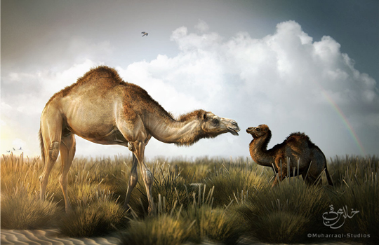 Animal Artworks