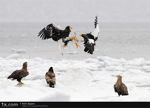 Stunning Moments Captured With Great Timing (Action Photography) 3