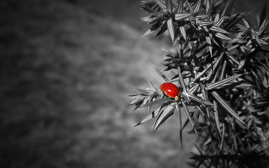 Mindblowing Assortment Of Black And White Photography With Partial Colors 19