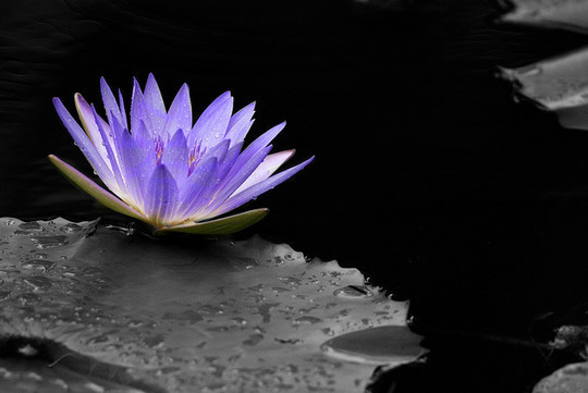 Mindblowing Assortment Of Black And White Photography With Partial Colors 2