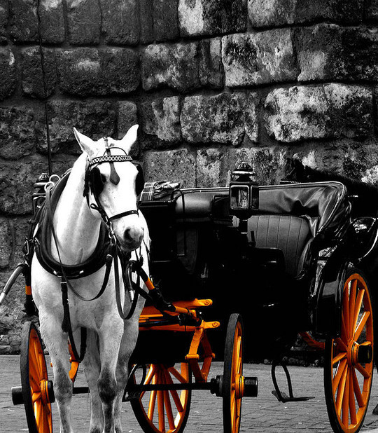 Mindblowing Assortment Of Black And White Photography With Partial Colors 32