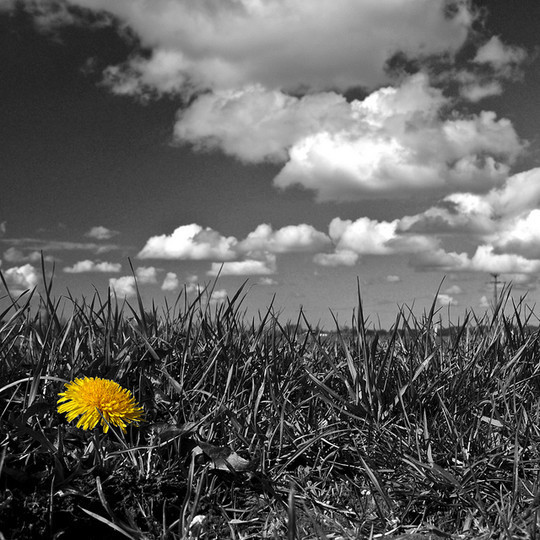 Mindblowing Assortment Of Black And White Photography With Partial Colors 33