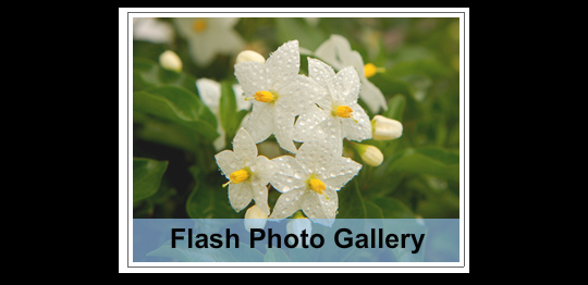 Flash Image Tutorials