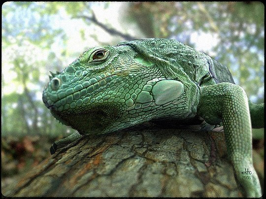The Most Stunning Examples of 3D Animal Artworks 28
