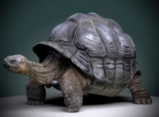 The Most Stunning Examples of 3D Animal Artworks 32