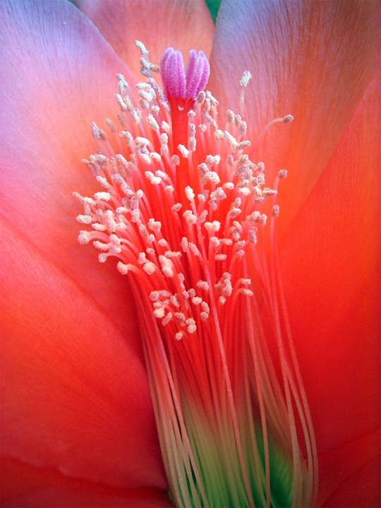 Truly Adorable Beauty Of Flowers Captured With Vibrant Colors 4