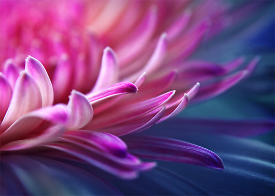 Truly Adorable Beauty Of Flowers Captured With Vibrant Colors 2