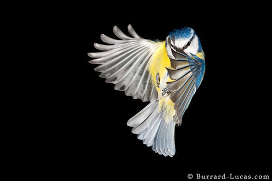 55 Breathtaking Examples Of High Speed Photography 53
