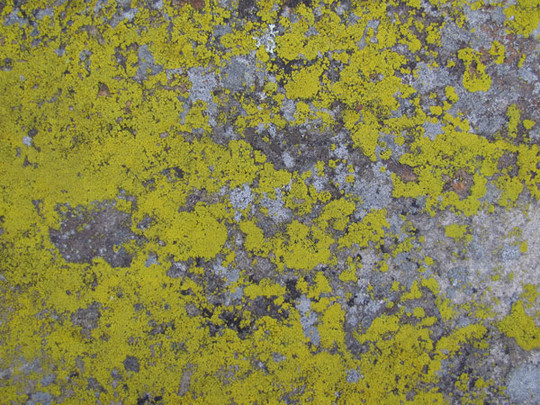 Best Of 2011: 70 Beautiful And High Quality Free Textures 31