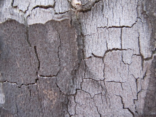 Best Of 2011: 70 Beautiful And High Quality Free Textures 15