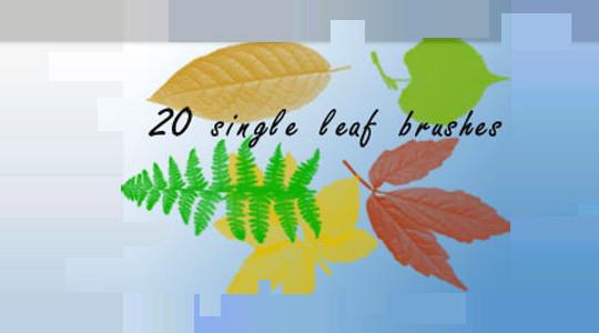 19 Free Photoshop Leaf Brush Sets 19
