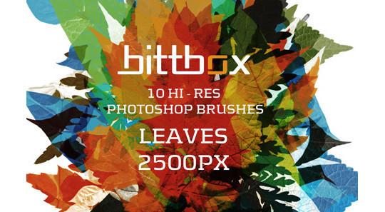 19 Free Photoshop Leaf Brush Sets 8