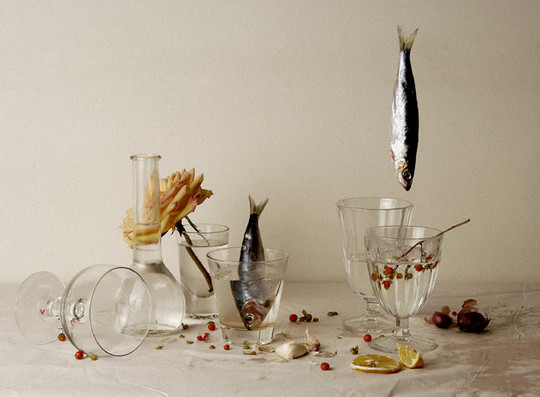 44 Outstanding Examples Of Still Life Photography 36