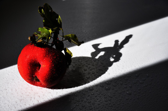 44 Outstanding Examples Of Still Life Photography 15