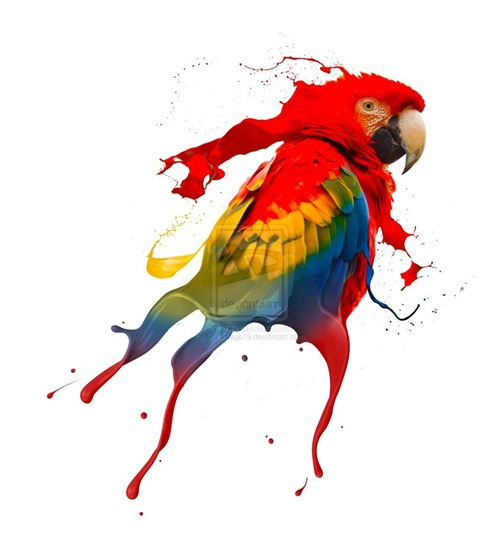 Creative-Photography-creative-parrot