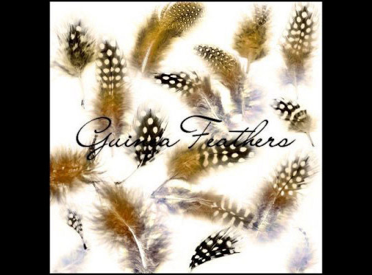 24 Free Photoshop Feather Brushes For Download 13