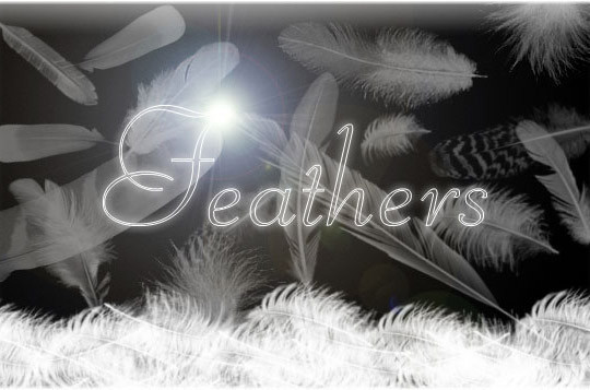 24 Free Photoshop Feather Brushes For Download 24