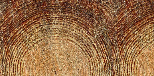 19 Useful And Realistic Wood Textures 7