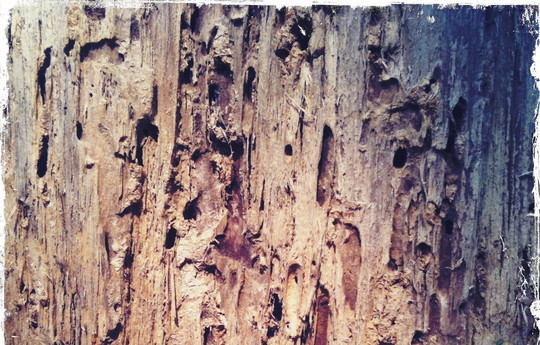 19 Useful And Realistic Wood Textures 8