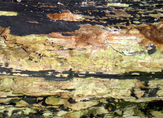 15 Rotten And Decayed Wood Texture For Free Download 4