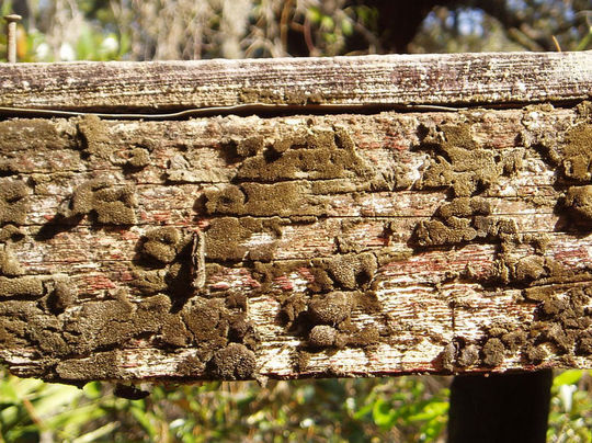 15 Rotten And Decayed Wood Texture For Free Download 1