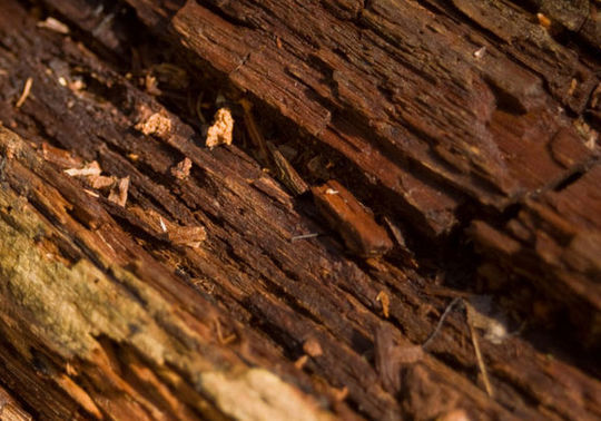 15 Rotten And Decayed Wood Texture For Free Download 5