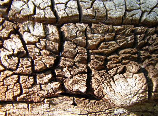 15 Rotten And Decayed Wood Texture For Free Download 2