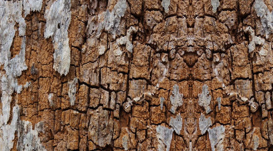 15 Rotten And Decayed Wood Texture For Free Download 7