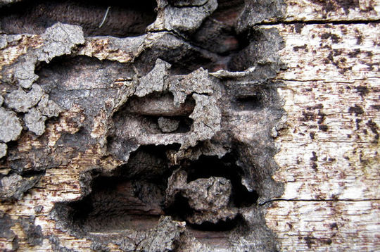 15 Rotten And Decayed Wood Texture For Free Download 11